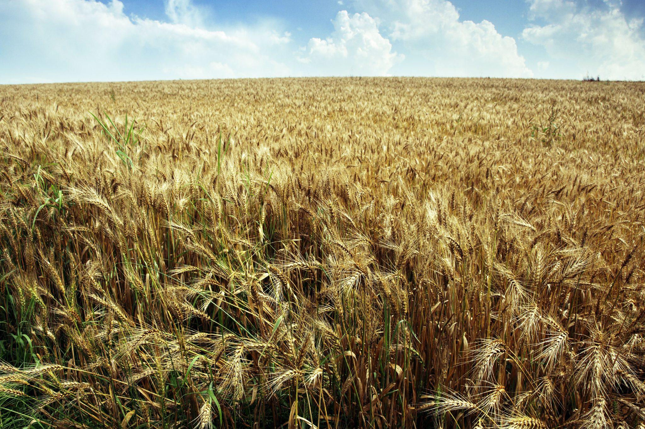 Rolnicy mają dość